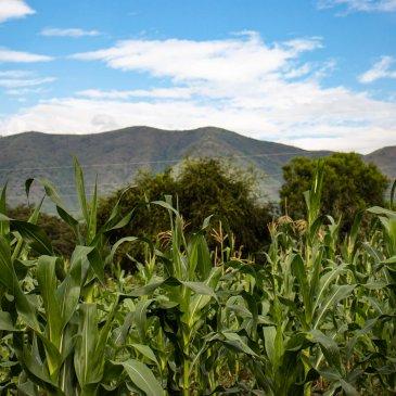 Uganda Scenery