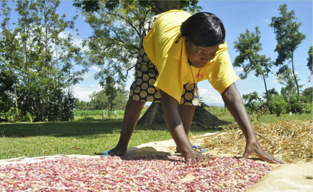 Traditional method of drying crops